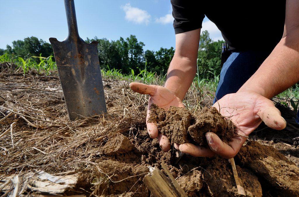 Sampling Locations (Soil, Plant Tissue, Well, Lagoon, Manure, Tile Drains)