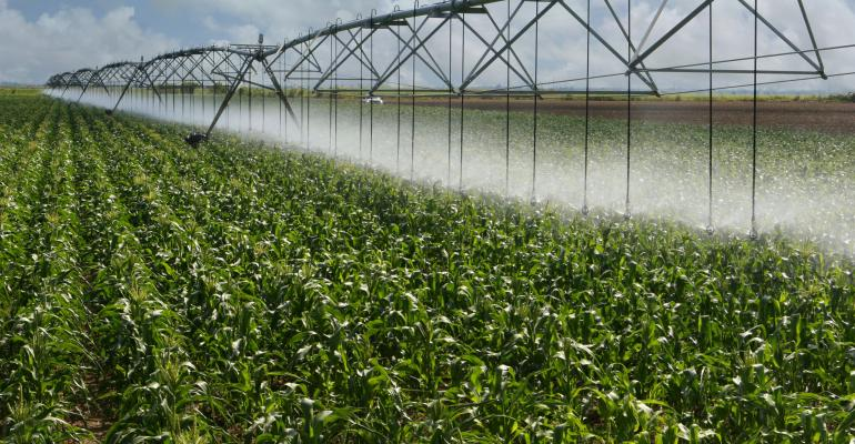 Nitrogen & Irrigation Summary